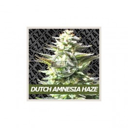 Dutch Amnesia Haze
